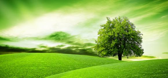 Corsi Green Economy